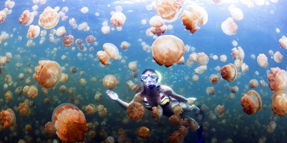 Jellyfish diving